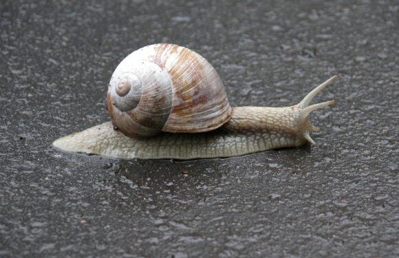 Runaway Snail