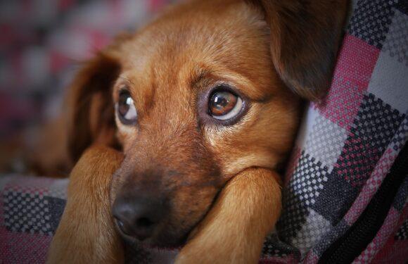 Puppy Update