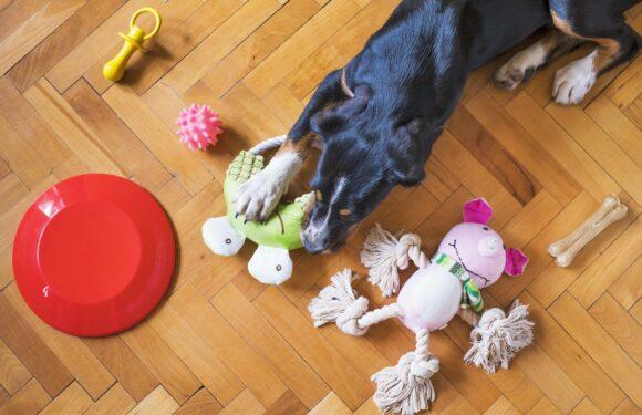 Puppy Attacks! Puppy Attacks!