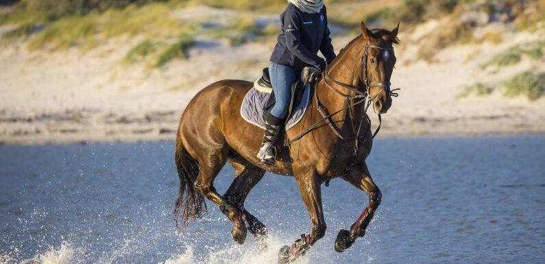 Cheap Equestrian Clothing